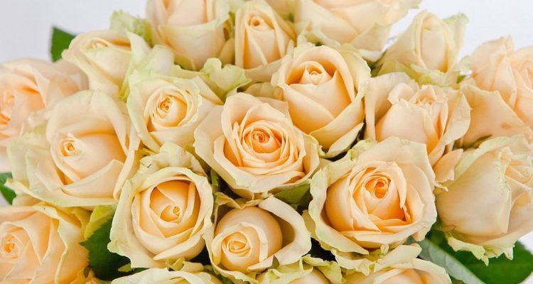 Кремовые розы: особенности цветочного подарка